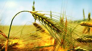 Konya Tohum 2017 6.Tohum Teknolojileri  ve Ekipmanları Fuarı Etkinlik Afişi
