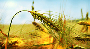 Tokat Tarım Fuarı 2017, Tokat Tarım ve Hayvancılık Fuarı Etkinlik Afişi